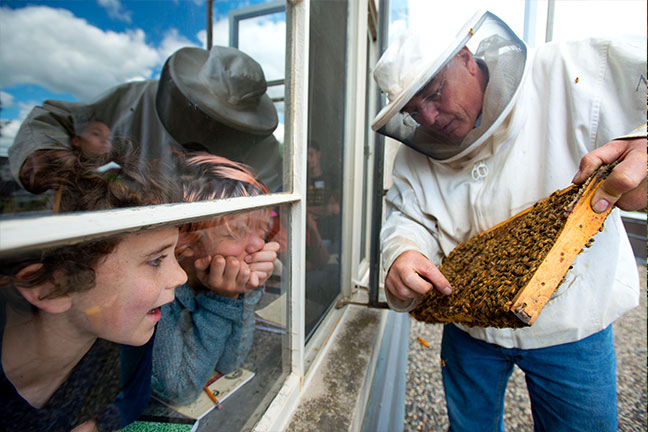 A beekeeper holding a hive frame still covered in honeybees and teaching young children